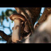 Mushroom Weasel